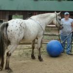 Les chevaux, acteurs de la médiation animale