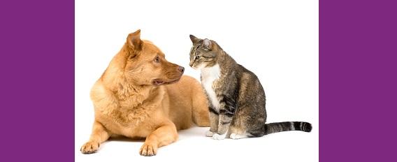 Les animaux de compagnie : bons pour le moral des seniors