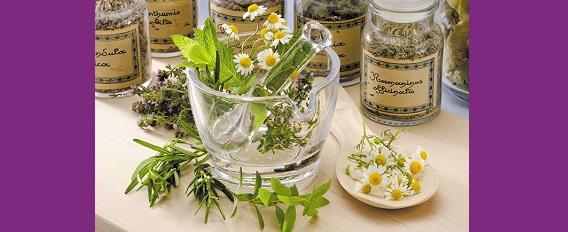 Booster mémoire et concentration grâce aux plantes