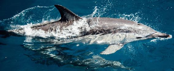 Nager avec des dauphins virtuels : une thérapie ?