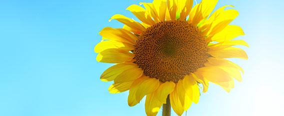 bienfaits du soleil
